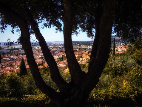 L'arbre aux 5 branches