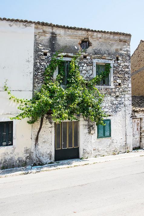 L'arbre devant la maison