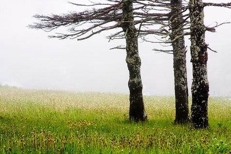 Trois arbres au cimetière