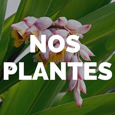 nos plantes.png