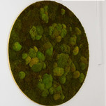 Mechový obraz - kruh