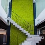 Mechová stěna Spring green schodiště