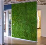 Mechová stěna - tráva plochý mech