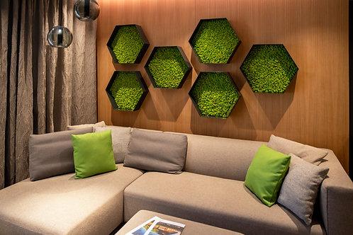 Hexagon - norský sobí mech
