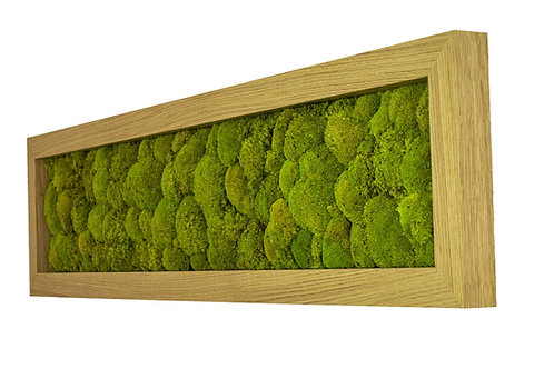 Mechový obraz v dubovém rámu -Spring green