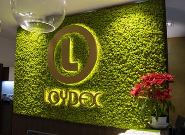 světelné logo v mechovém obrazu