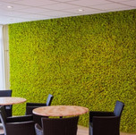 Mechová stěna Spring green