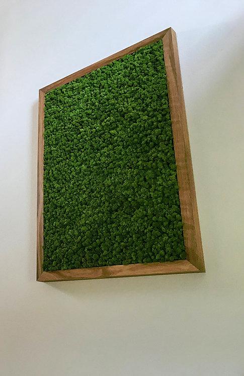 Mechový obraz v masivu, norský sobí mech - medium green