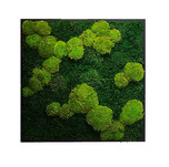 mechový obraz - kopeček a plochý mech.jp