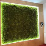 Stěna 100% plochý mech - Spring green