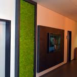 Mechová stěna - Spring green