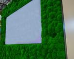 kopečkový mech - lesní tráva 2.jpg