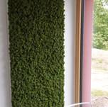 Mechový obraz - Medium green