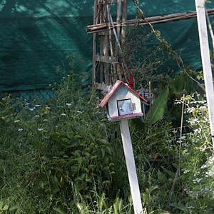Birdhouse Initiative: Community Garden