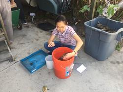 LA Worm Farm Collective