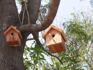 Birdhouses: Susie Choi