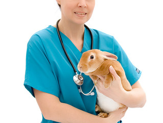 Rabbits and Guinea Pigs: when to see the vet!