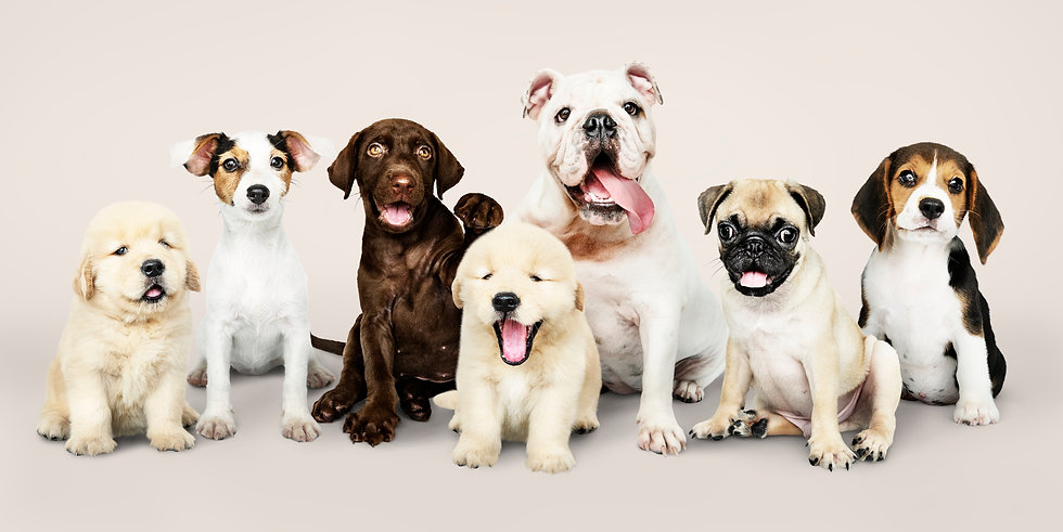 Group portrait of adorable puppies.jpg