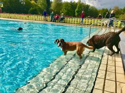 Arriba_knapp-4-Jahre_Hundespieltag