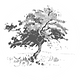 Tree oval.png
