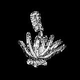 Aloe Vera Plant_edited.png