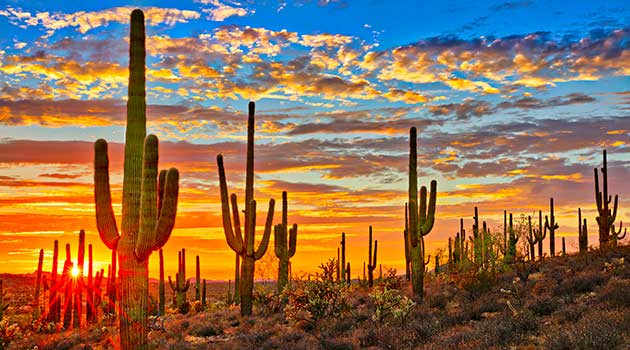 Mexican Desert, Baja California cacti
