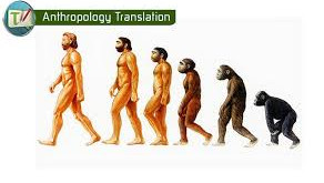 Translation in anthropology: theoretical assumptions and practical cases