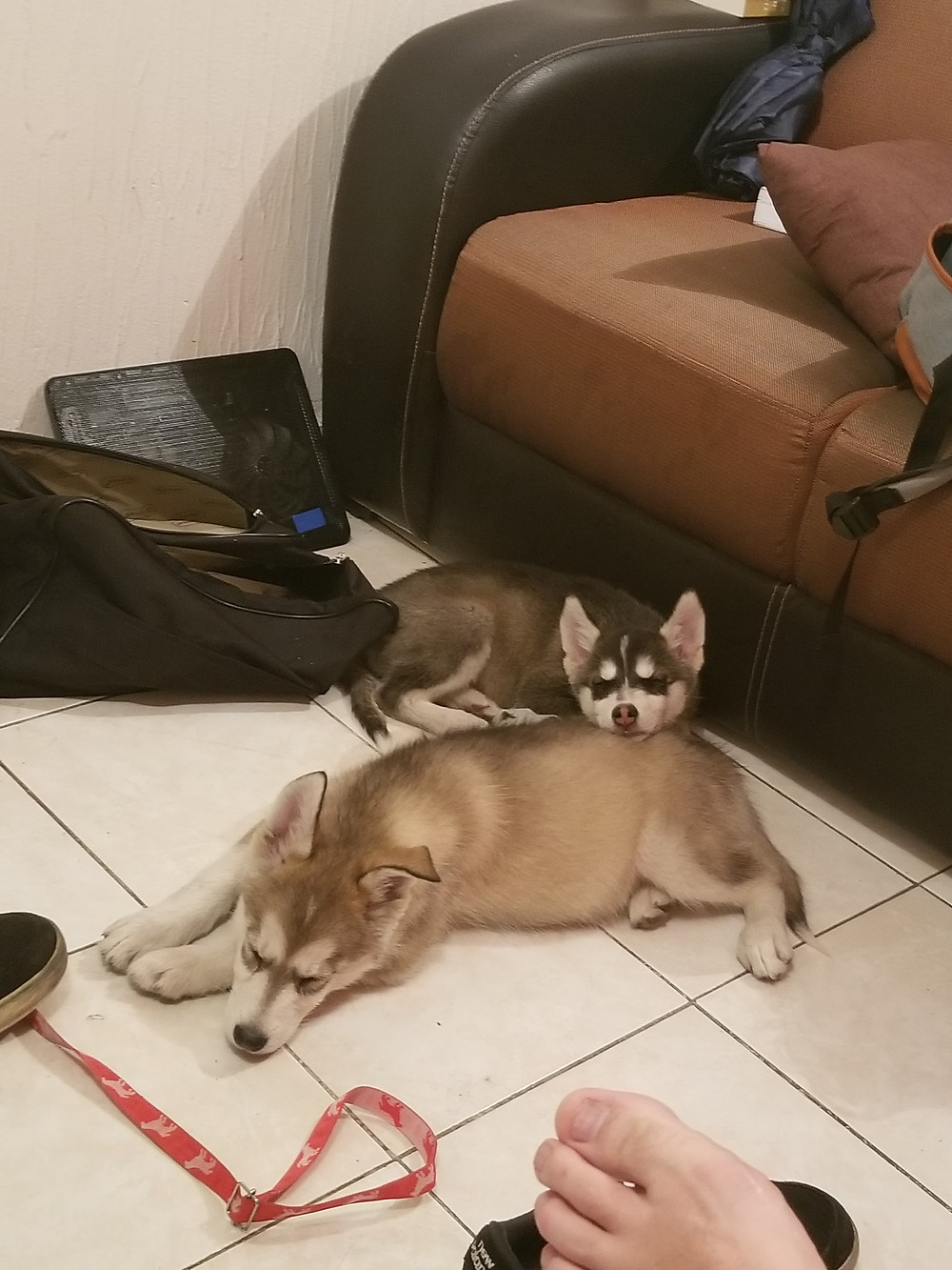 Animal and Akira; all pooped out after a day of destruction