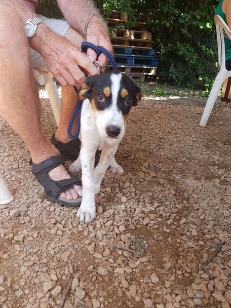 Dixie - Adoptée