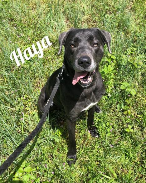 Haya - réservée
