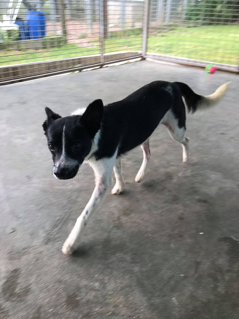 Dolly - Adoptée