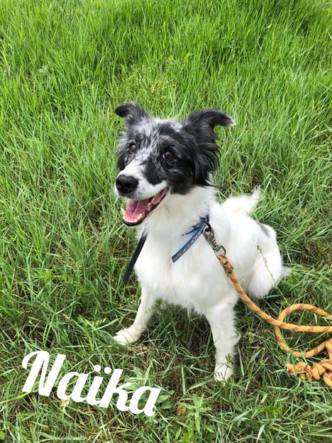 Naïka - Adoptée