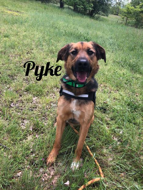 Pyke - Adopté