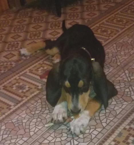 Snoopy - Adopté