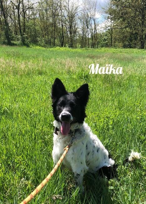 Maïka - Adoptée