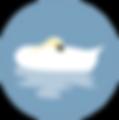 Vsed logo 2.png