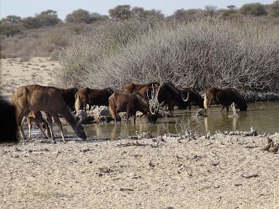 De volta à Namíbia- segunda parte