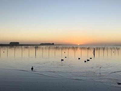 Caçadas de aves na Argentina 2019