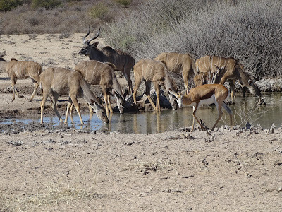 Retorno à Namíbia