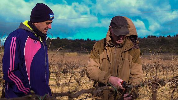 yannick pons domaine la domitienne vigne languedoc roussillon méditerranée