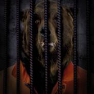 Free The Wild - Bear