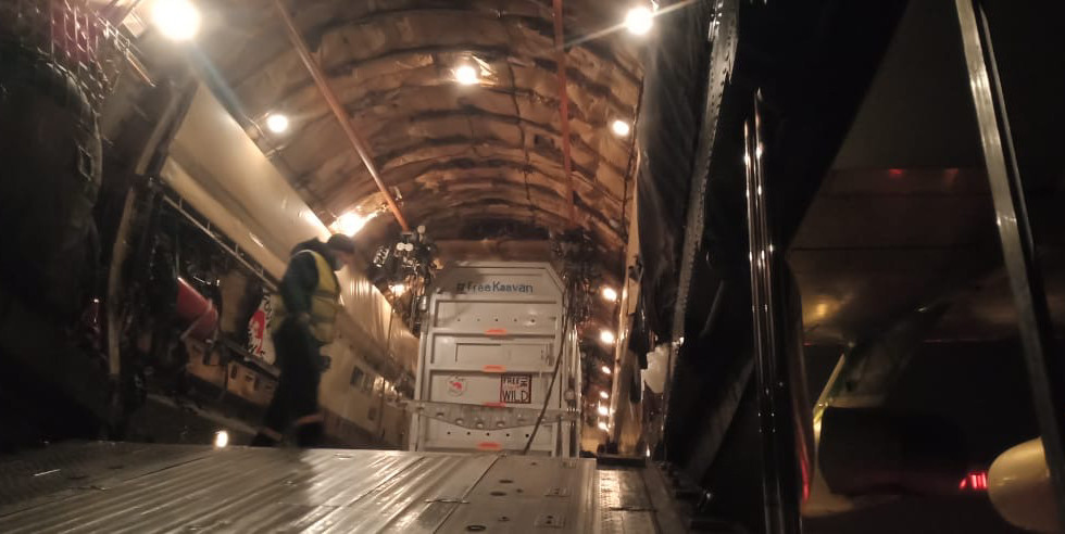 Kaavan being loaded into the second largest aircraft in the world