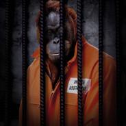 Free The Wild - Orangutan