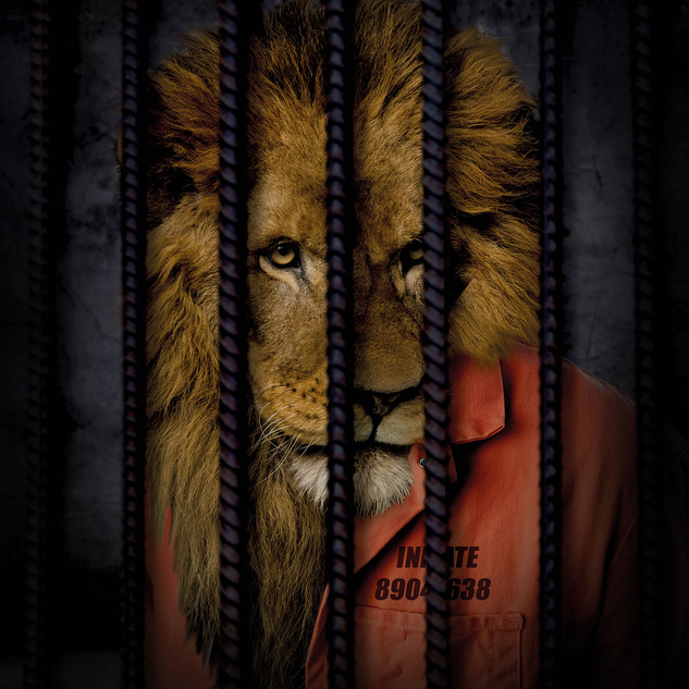 Free The Wild - Lion