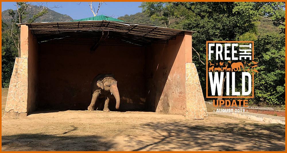 Free The Wild - August Update