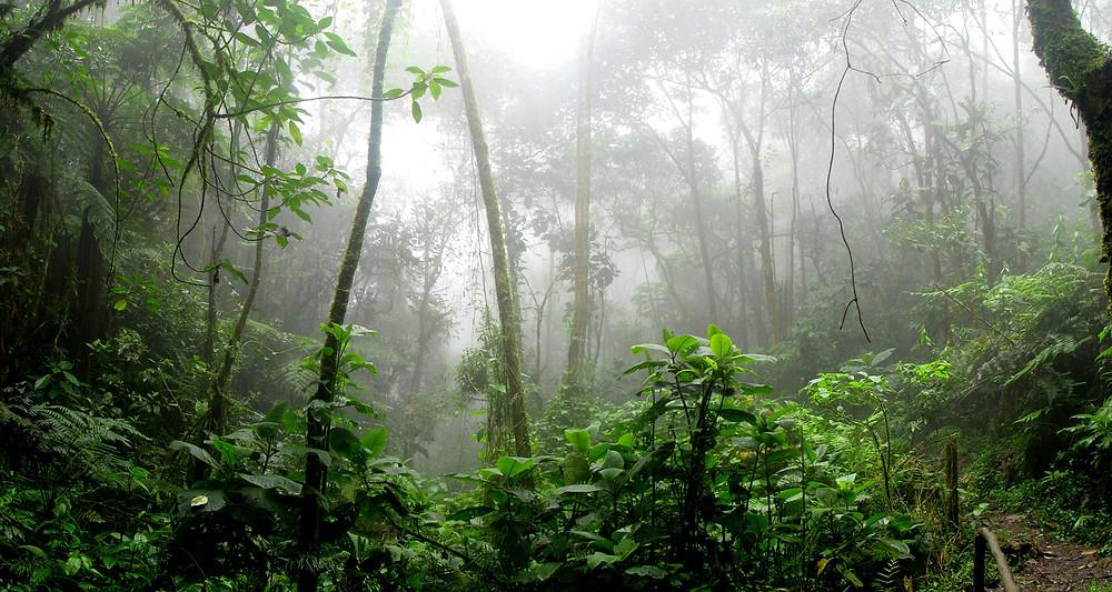 Jungle Utopia