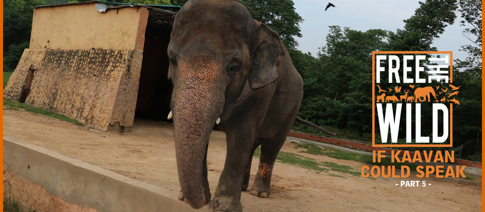 If Kaavan Could Speak - Part 5/5