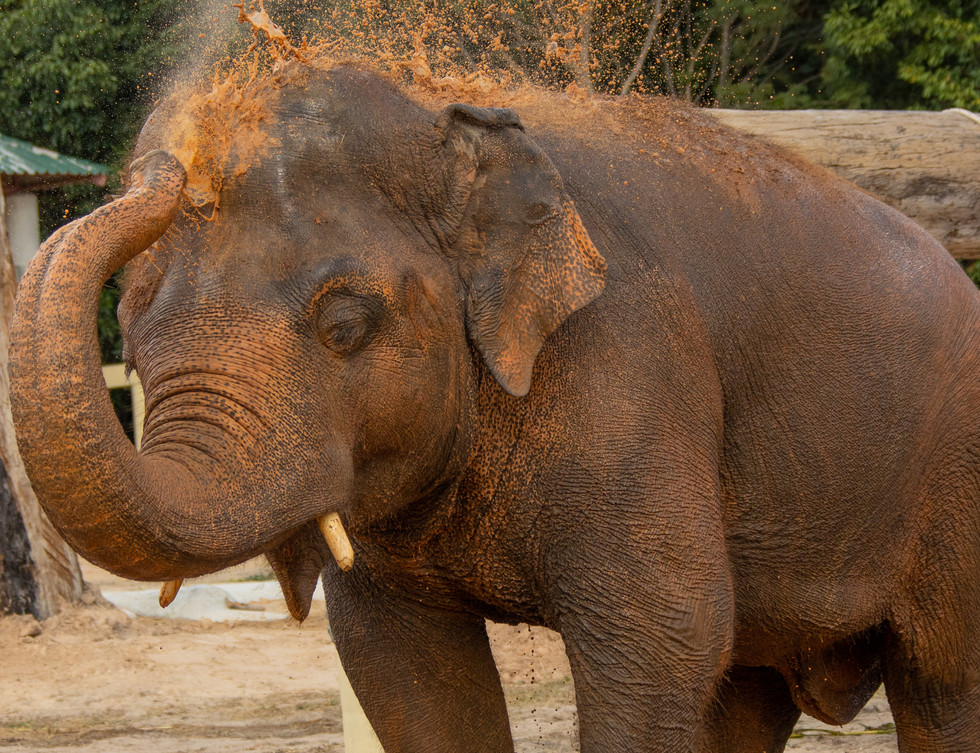 One more shower for Kaavan