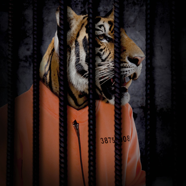 Free The Wild - Tiger