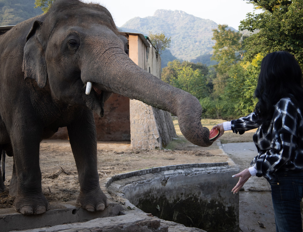 Cher making friends